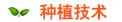 海棠树种植技术